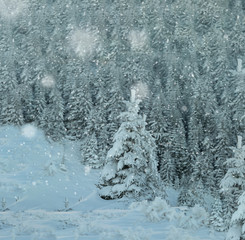 Fairy tale winter background during heavy snow fall. Mid winter cold in the mountains