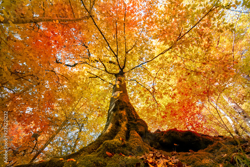 Foto op Canvas Herfst Morning scene in colorful woodland with nature concept