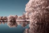 Fototapeta Landscape - Parc rose