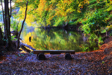 Autumn View Of The Forest Lake...