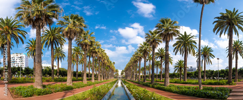 Panorama of Palm trees in The Arab League Park ( Parc de la Ligue Arabe ) in Casablanca, Morocco Fotobehang