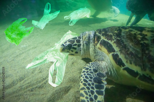 Photo  Sea Turtle eat plastic bag ocean pollution concept