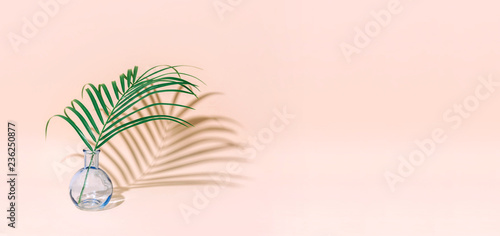 Minimal pure composition with palm leaf in a vase on pastel background.