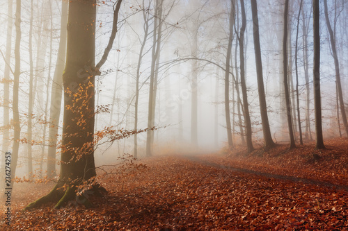 Cadres-photo bureau Foret brouillard Autumn nature. Colored trees in sunlight in forest. Autumn forest. Fall nature.