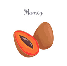 Mamey Exotic Juicy Fruit Vector Whole And Cut Icon