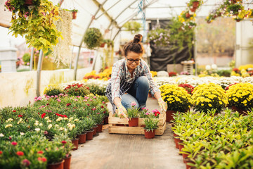 Panel SzklanySmiling female florist putting flowers in crate while kneeling in greenhouse. Flowers in pots all around.