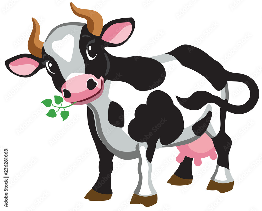 Fototapeta cartoon black cow . Isolated vector illustration