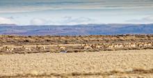 Desert Speedsters