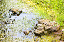 Stagnant Water With Stones Emerging On The Surface