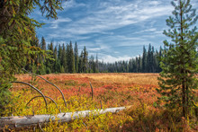 Headwaters Meadow
