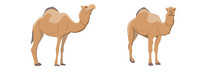 Collection Of One-humped Camel...
