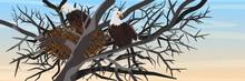 A Pair Of Bald Eagles Sits In A Nest Of Branches On A Tree. Animals Of North America. Realistic Vector Landscape