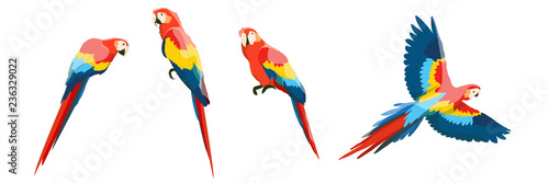 Photo Set of large red-blue macaw parrots