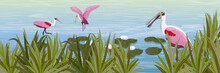 A Flock Of Pink Roseate Spoonbill Birds In The Water. Pond With White Water Lilies And Grass. Animals Of Florida, Chile And Argentina. Everglades National Park. Rainforest. Realistic Vector Landscape