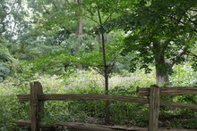 Greenery And Fence