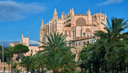 Fotobehang Monument Lush palm trees and Cathedral of Palma de Mallorca or La Seu. Spain
