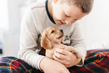Caucasian Boy Playing With Dog English Cocker Spaniel Puppy At Home.