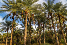 The Biggest Palm Grove In Tuni...