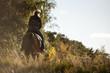Reiterin galoppiert der Sonne entgegen