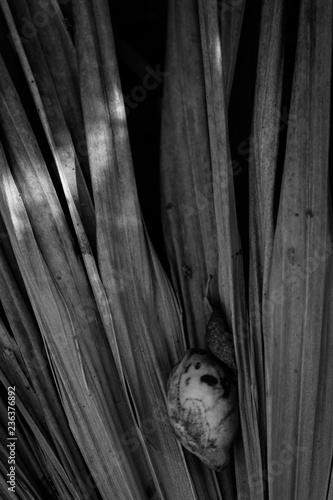 Valokuva  Detalles de hojas