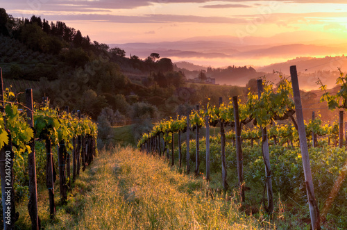 Montage in der Fensternische Schokobraun Vineyard landscape in Tuscany, Italy. Misty sunrise