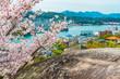 尾道の桜と鼓岩