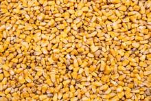 Corn Kernel Background