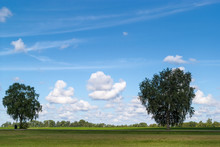 Blue Sky With White Fluffy Clouds And Foreground Green Meadow With Two Lone Trees With Green Leaves.