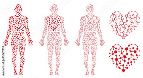 Fototapeta  Human Body Health, Heart and Blood, Blood Circulation