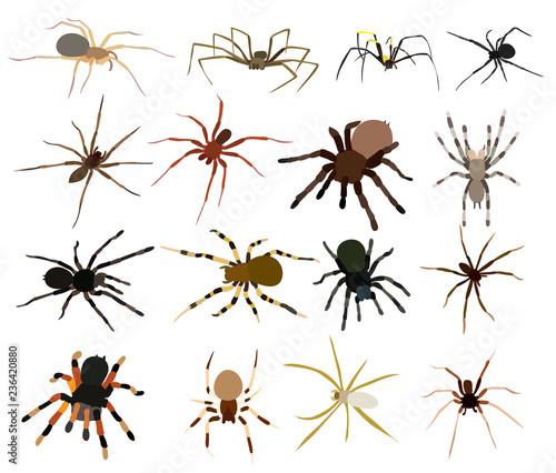 Foto spider set, collection