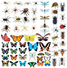 Isolated Insects Set