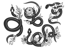 Snakes And Flowers. Hand Drawn Vector Set. All Elements Are Isolated