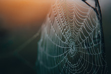 Spider Web Detail In Morning Light