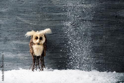 Fotografia, Obraz  owl on the snow