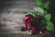 Dry Red  Roses  On Grunge Wooden Background,still Life