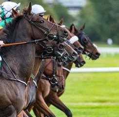 Konie wyścigowe ustawione w szeregu na początku wyścigu