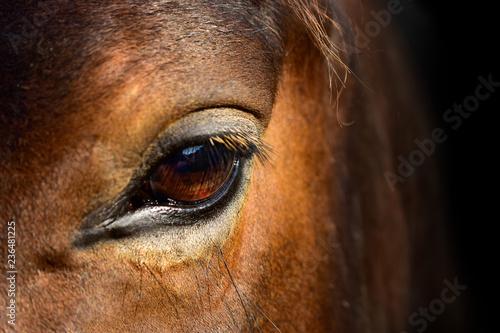 Canvas Prints Horses Brown Horse macro eye