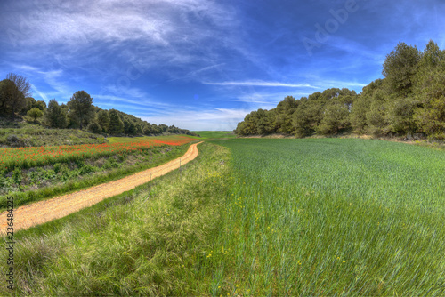 Scenic view of footpath amidst green landscape against blue sky during sunny day