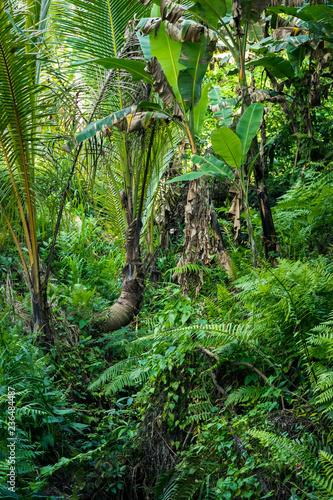 Fotomural jungle tropicale