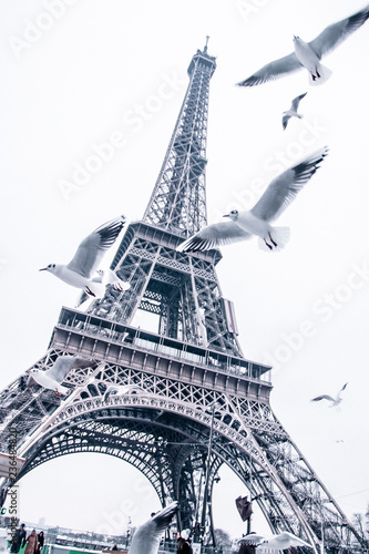 Low angle view of birds flying against Eiffel Tower in city
