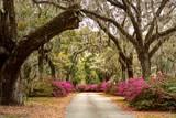 Blooming Cemetery