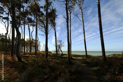 Fototapeta Darßer Weststrand, Nationalpark Vorpommersche Boddenlandschaft, Mecklenburg Vorpommern, Deutschland obraz na płótnie