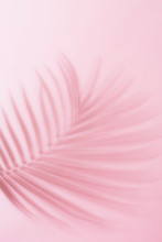 Palm Frond Shadow On Pink Surf...