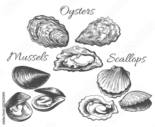 Fotografie, Obraz Oysters and scallops sketch