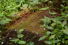 Mossy Log Close Up