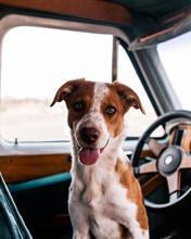 Quinn In The Car