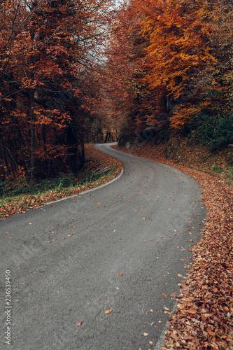 colorful autumn road