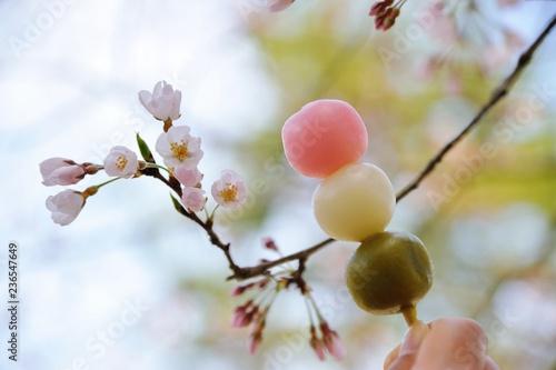 Fotografie, Obraz  お花見団子と桜
