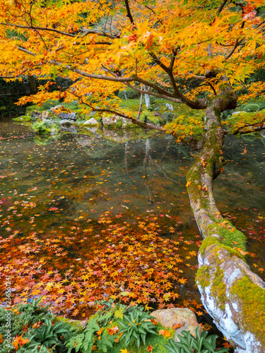 Deurstickers Asia land kodaiji temple garden / autumn leaves tree , kyoto , japan
