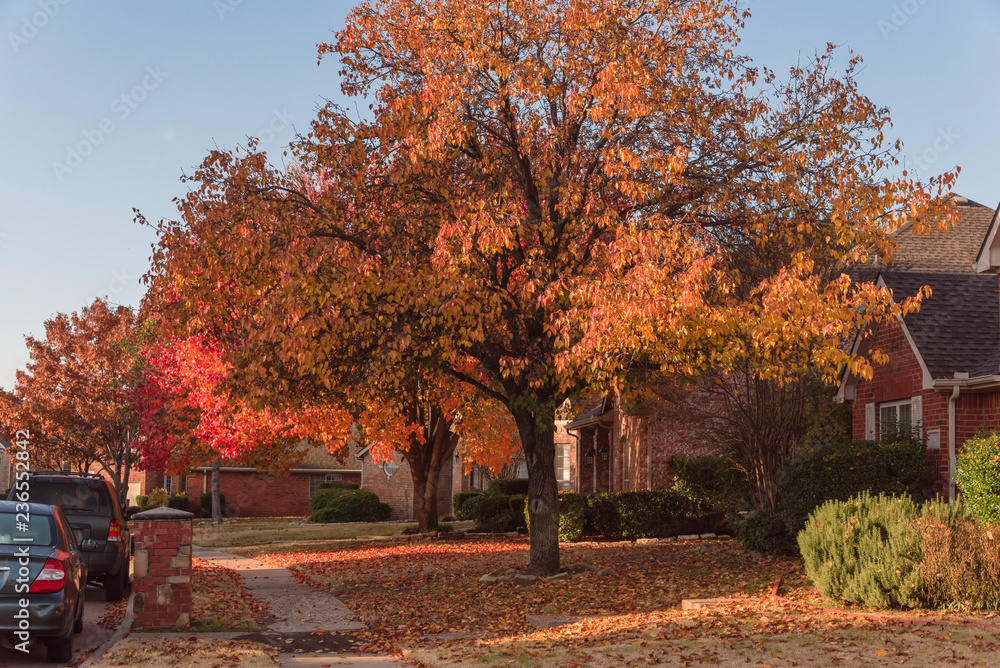 Wall Stickers Colorful Fall Foliage At Front Lawn Of